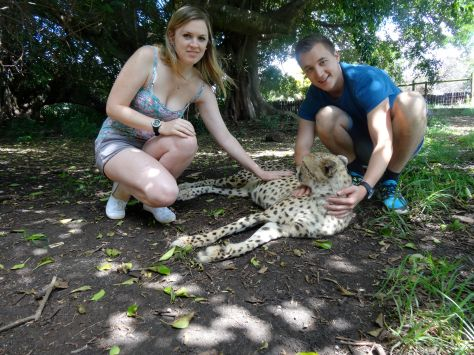 Playing with one of the domesticated cheetahs.